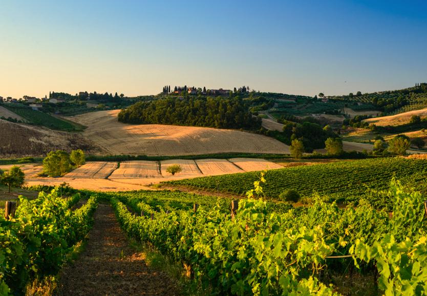 Toskania, blog o Włoszech, blog o Toskanii, winnice w Toskanii, gdzie jechać do Toskanii, winnice we Włoszech